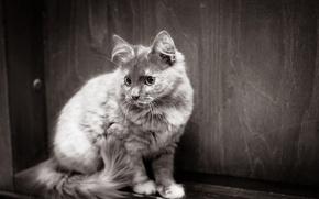 Обои фон, цвет, взгляд, кошка