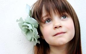 Картинка девочка, челка, ребенок, дитя, розочка, цветок, волосы