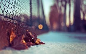 Картинка листья, макро, снег, фото, фон, обои, размытость, боке