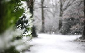 Картинка зима, макро, снег, природа, туя