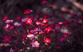 Картинка природа, краски, растение, лепестки