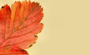 Картинка осень, природа, лист, краски
