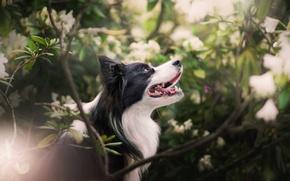 Картинка ветки, собака, кусты, боке