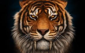 Обои морда, тигр, клыки, саблезубый
