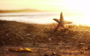 Картинка солнце, закат, камни, побережье, морская звезда