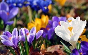 Картинка Цветы, красота, фиолетовые