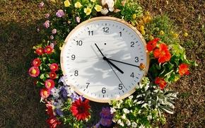 Картинка трава, цветы, стрелки, часы, циферблат