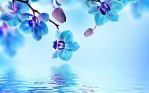 Картинка вода, цветы, цветение, орхидея, blue, water, flowers, beautiful, orchid, reflection
