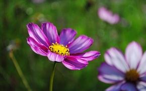 Обои макро, розовое, цветок