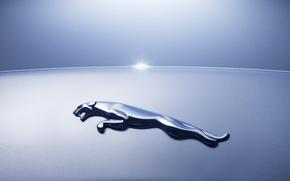 Обои Jaguar, машины, logo