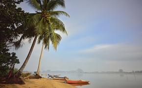 Картинка небо, туман, пальма, берег, лодка, залив