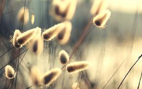 Обои лучи, свет, природа, растения, стебли, лето, солнце, пушинки