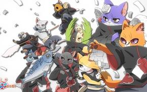 Картинка кошки, атака, рыба, пародия, Naruto, бумажки, Itachi, ninja, Akatsuki, Deidara, Yahiko, Konan, Tobi, Hidan, Kisame, ...