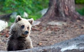 Картинка лето, медведь, природа