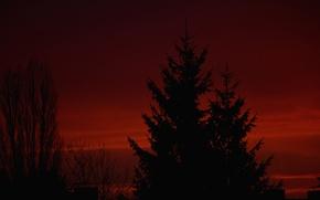 Картинка небо, облака, деревья, ночь, силуэт, зарево