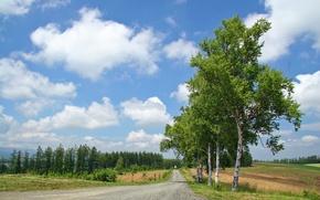 Картинка дорога, лес, лето, облака, деревья, березы