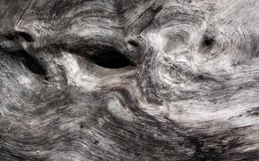 Картинка фон, дерево, текстура