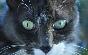 Картинка животные, взгляд, кошки