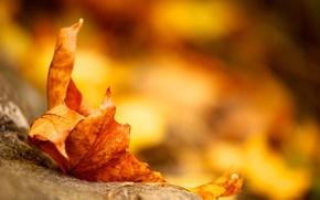 Картинка осень, желтый, земля, листок