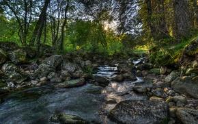 Картинка лес, деревья, камни, Норвегия, речка, Norway
