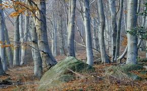 Картинка лес, трава, деревья, камень