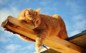 Обои кошка, балка, отдых? солнечно, доска, брус, рыжий, лежа, деревяшка, солнце, небо, кот