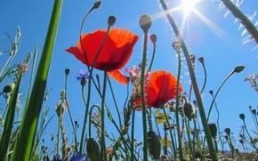 Обои небо, солнце, лучи, поле, луг, трава