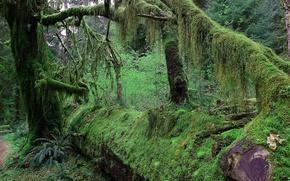 Картинка лес, деревья, заросли, мох, ветка, чаща, джунгли, ствол