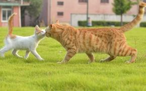 Картинка кошка, трава, встреча, котёнок