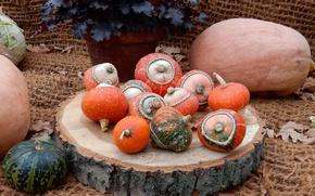 Картинка осень, цветок, widescreen, урожай, тыквы, тыква, выставка, wallpaper, широкоформатные, background, обои на рабочий стол, полноэкранные, …