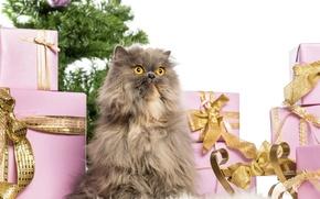 Картинка кошка, елка, Рождество, Новый год, christmas, new year, cat, christmas tree