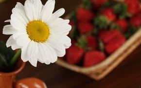 Картинка макро, цветы, ромашка, клубника