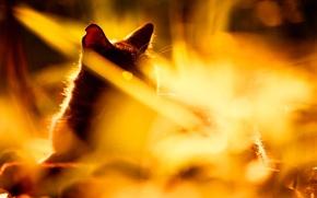 Картинка кошка, лето, трава, кот, свет, природа, черная, солнечный свет