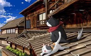 Картинка крыша, коты, nyan koi