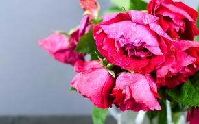 Обои макро, розы, букет