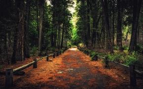 Картинка лес, деревья, природа, Калифорния, дорожка, Йосемити, тропинка, California, Yosemite National Park