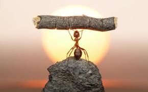 Картинка солнце, макро, закат, камень, муравей, насекомое, бревно, силач, обои от lolita777
