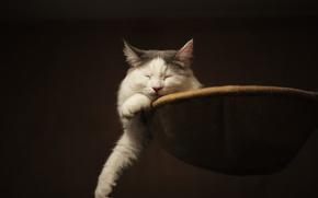 Картинка лапы, спит, кошка