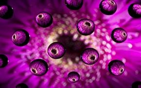 Обои шарики, макро, капли, цветок, розовый
