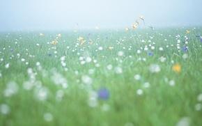 Картинка поле, цветы, свежесть, туман, утро