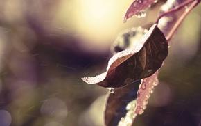 Картинка осень, листья, вода, капли, макро, природа, дождь, цвет, ветка