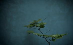 Картинка листья, цветы, макро растение
