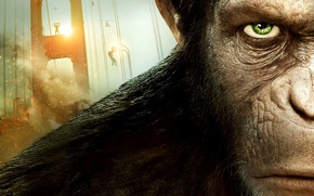 Картинка cinema, fire, flame, monkey, movie, animal, revolution, film, head, spark, chimpanzee, primate, Dawn Of The …