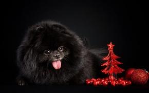 Картинка фон, новый год, шар, собака, ёлка