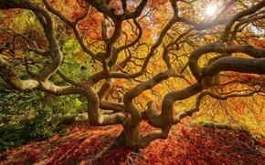 Картинка осень, листья, природа, дерево, краски