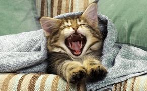 Обои усы, диван, пасть, котенок, зевает, уши, лапы, язык