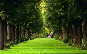 Картинка зелень, лето, трава, деревья, природа
