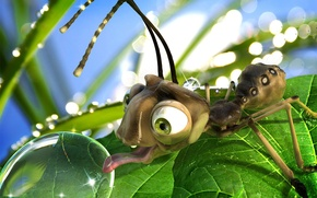 Обои роса, муравей, Water Drop