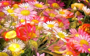 Обои цветы, ромашка, лепестки, луг, сад