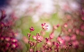Картинка поле, макро, цветы, природа, ветер, розовый